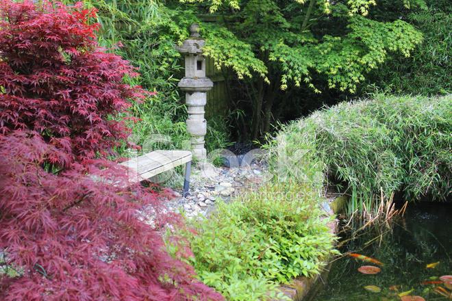 Japanese Garden With Koi Pond Granite Lantern Maple And