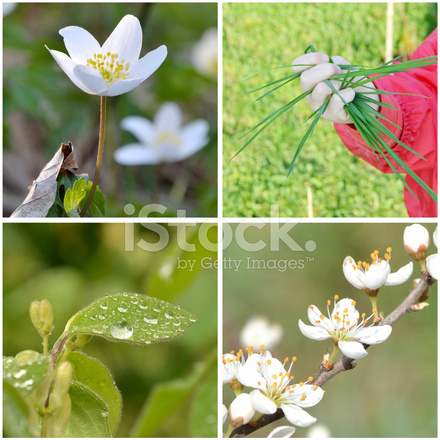 Herbst Ernte Stock Photos Freeimages Com