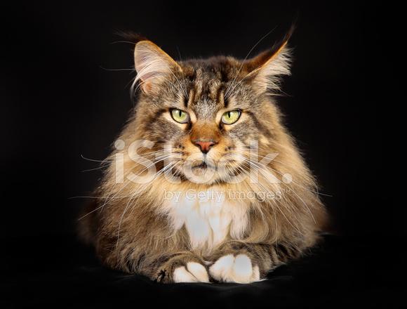 gi disease in cats
