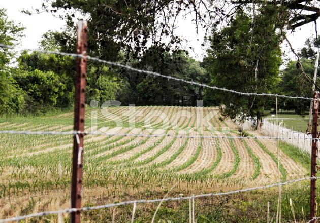 Industrial Craft  Crop Farming