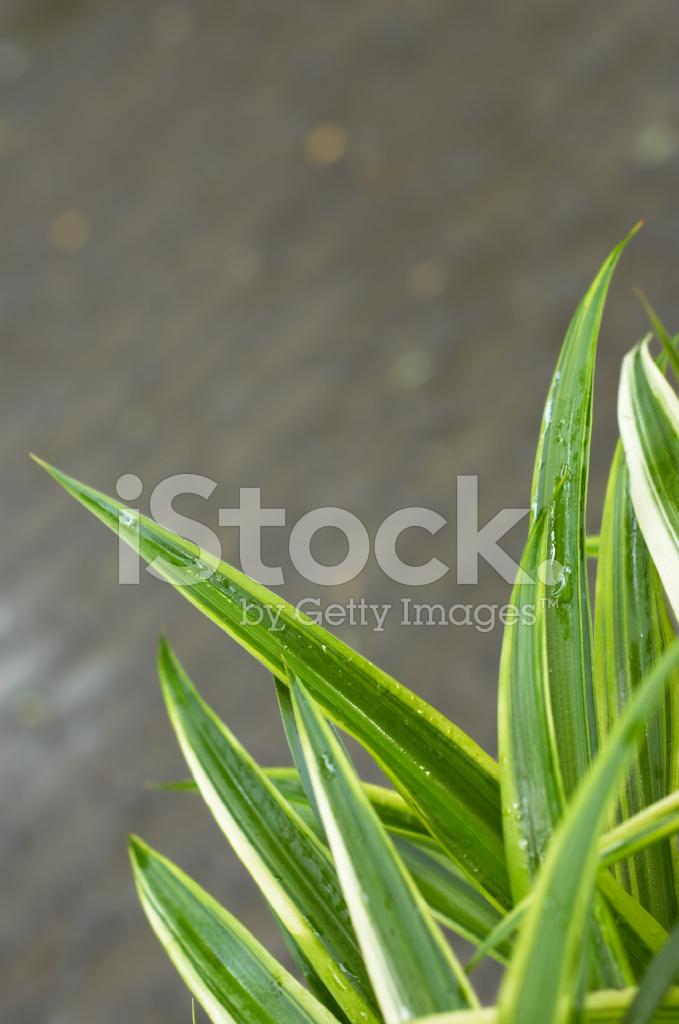 Grass Blades Closeup Stock Photos FreeImagescom