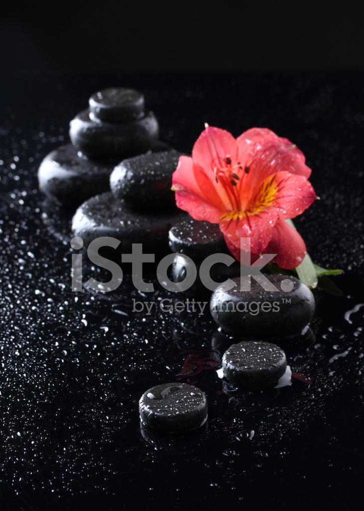 Pietre Spa Con Gocce E Fiore Rosso Su Sfondo Nero Fotografie Stock