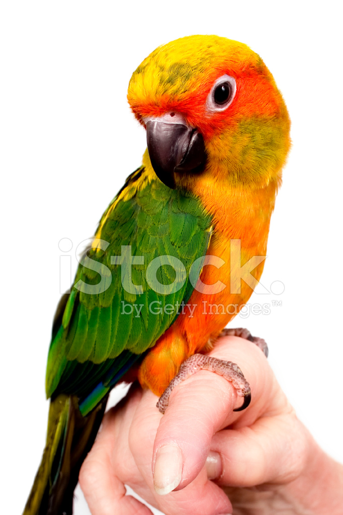"essay on parrot Published by experts share your essayscom is the home of thousands of essays published by essay on ""birds"" (500 words) intelligent like parrots and."