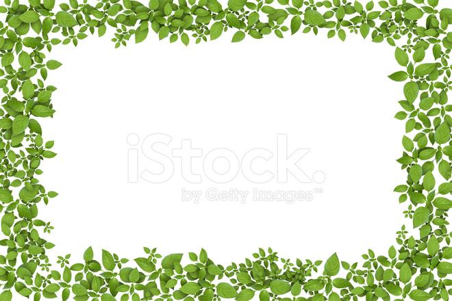 ǻ�色的植物帧 Dž�片素材 Freeimages Com