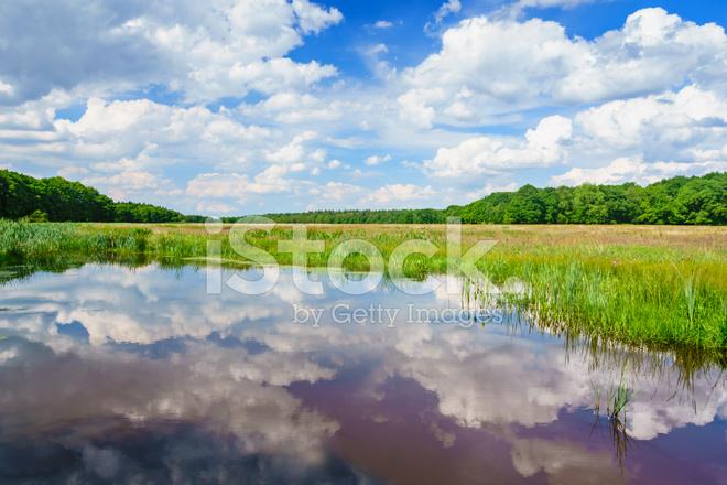 ドレンテ州、オランダの湿地帯 ...