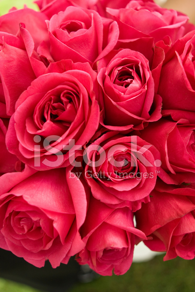 Bouquet Of Deep Pink Roses At Wedding Ceremony Stock Photos Freeimages Com