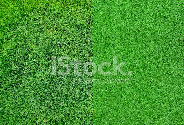 Texture Di Sfondo Verde Erba Fotografie Stock Freeimagescom