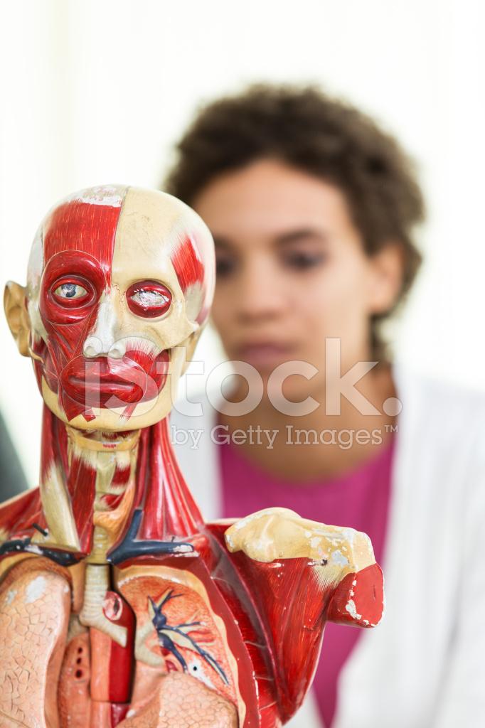 Frau Untersuchen Anatomische Modell Eines Menschlichen Körpers ...