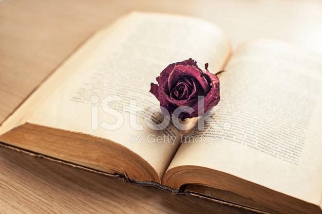 Sagesse Et Livre Ancien Ouvert Avec Rose Sechee Marron
