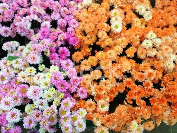 Automne Fleurs DE Différentes Floral Background Photos - FreeImages.com 6f7046a86aca