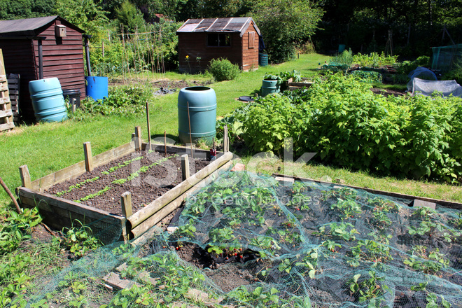 Image Of Allotment Vegetable Garden With Raised Bed