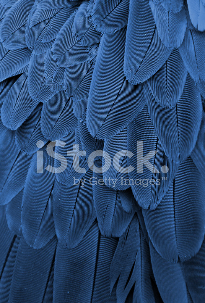 Blue Feathers Stock Photos Freeimages Com