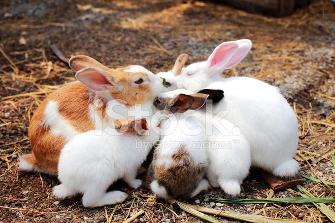 All Natural Rabbit Food