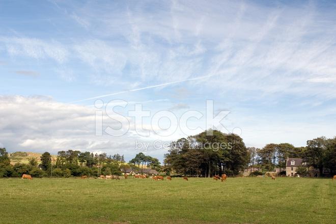 Scena Di Campagna Inglese Estate Fotografie Stock Freeimages Com
