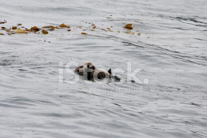 海獭妈妈抱着可爱的小狗
