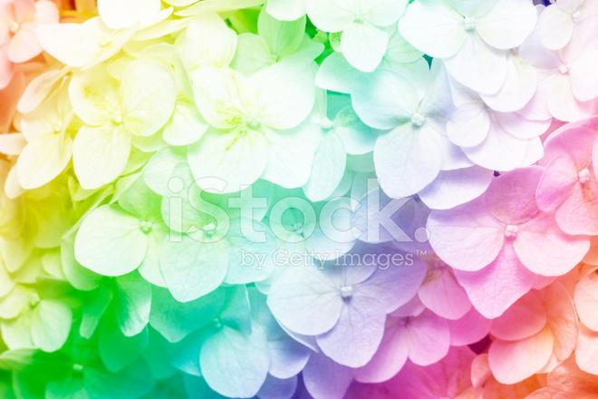 rainbow flower background - photo #12