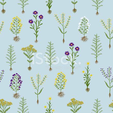 fleurs d 39 herbier avec racines mod le sans couture photos. Black Bedroom Furniture Sets. Home Design Ideas