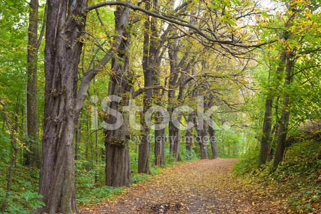 Forest path in fall poland stock photos freeimages forest path in fall poland publicscrutiny Gallery