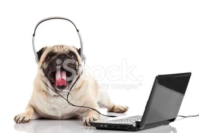 Dog In Center Of Room On White Background