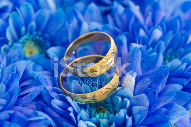 Lindas Flores Azuis Fotos Do Acervo Freeimagescom