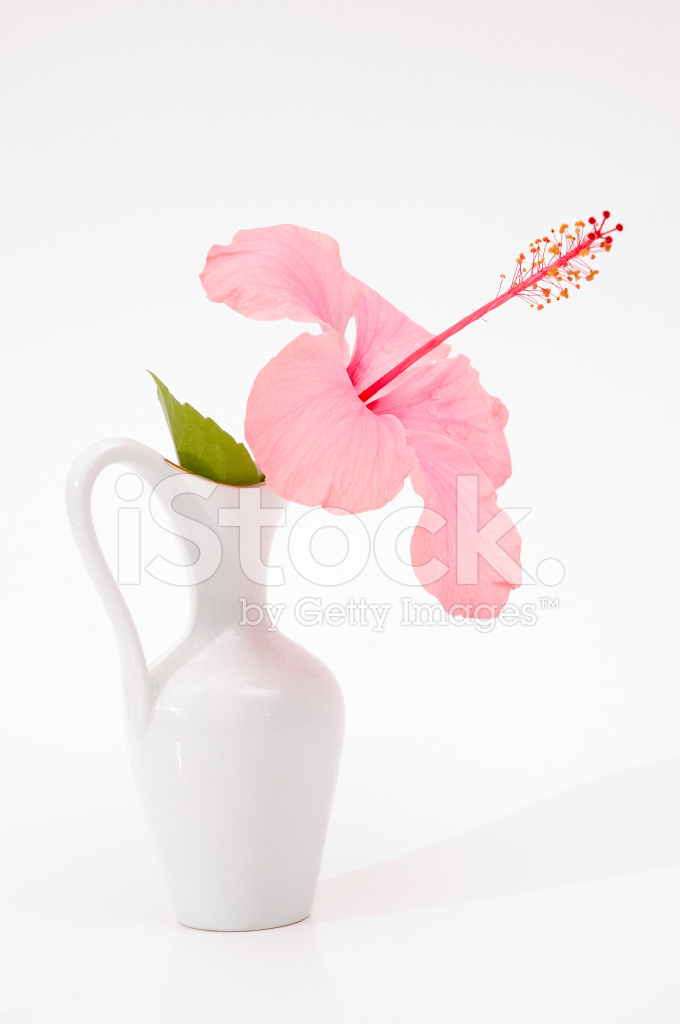 Hibiscus Flower In A Vase Stock Photos Freeimages