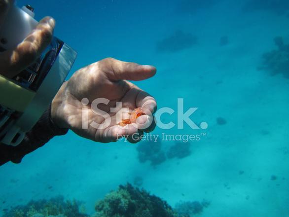 45346380-underwater-movie-star