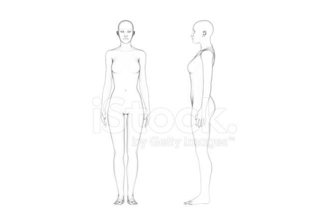 Female Body Proportions Line Art White Background Stock Photos Freeimages Com