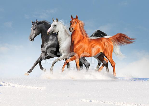 Bildresultat för gratis bilder på hästar
