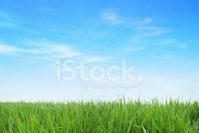 Lush Green Grass With Blue Sky Background Stock Photos ...