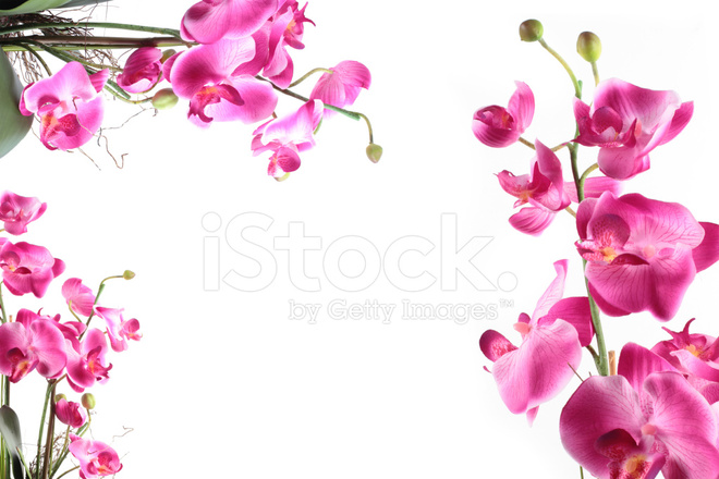 Frame of Pink Streaked Orchid Flower Stock Photos - FreeImages.com
