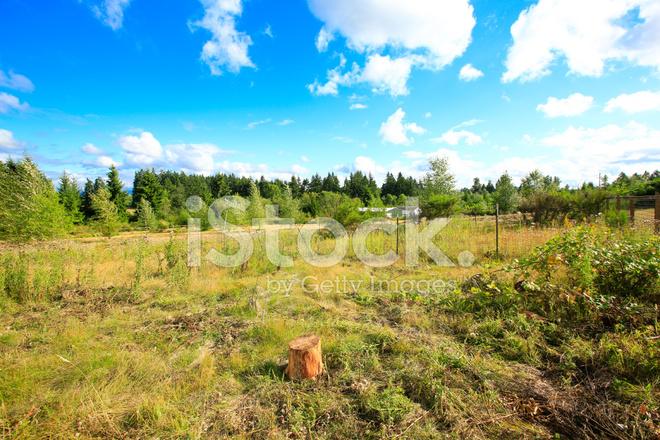Paesaggio Di Fine Estate Nello Stato Di Washington Fotografie Stock