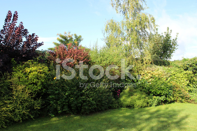 Image Of Evergreen Shrubs In Garden Border Shady Shade Sunny