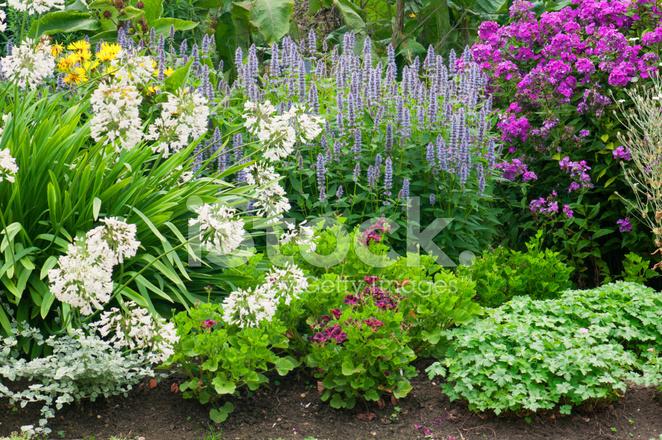 Bordure jardin de fleurs vivaces lit photos for Fleurs de jardin vivaces