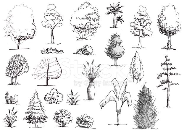Plan And Elevation Of Trees : Hand drawn trees and shrubs black white elevation