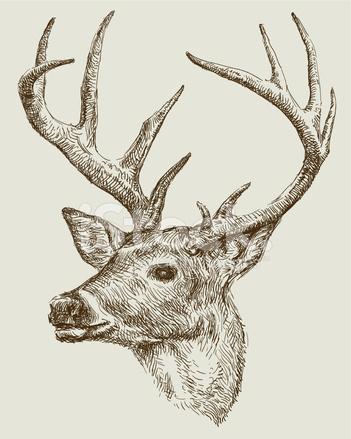 Rysunek Sarna zdjęcia ze zbiorów - FreeImages.com