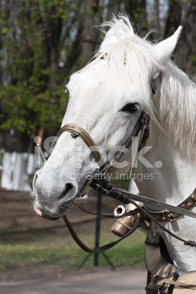 Horse Harness Stock Photos