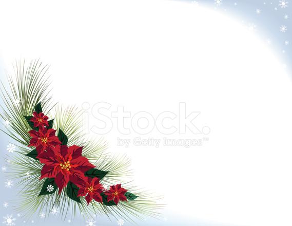 Snowy Poinsettia Background stock photos - FreeImages.com