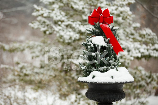 Outdoor Christmas Ribbon.Red Ribbon Outdoor Christmas Tree In Snow Stock Photos
