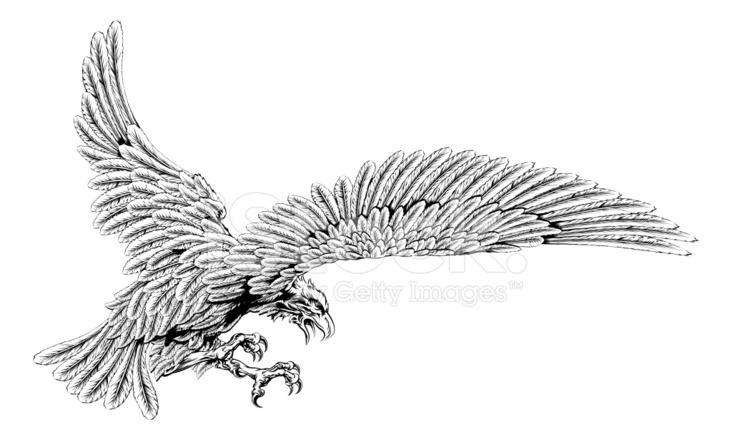 swooping eagle stock vector. Black Bedroom Furniture Sets. Home Design Ideas
