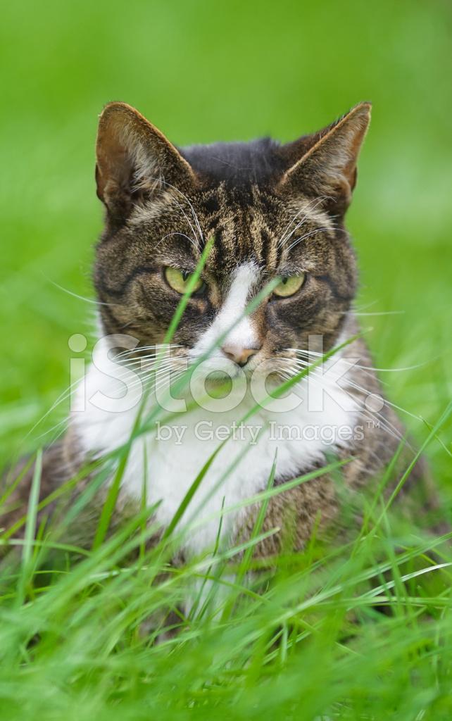 Kot W Tapeta Trawa Zdjęcia Ze Zbiorów Freeimagescom