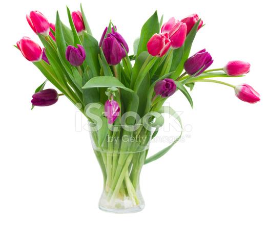rosa und violette tulpen blumenstrau in der vase. Black Bedroom Furniture Sets. Home Design Ideas