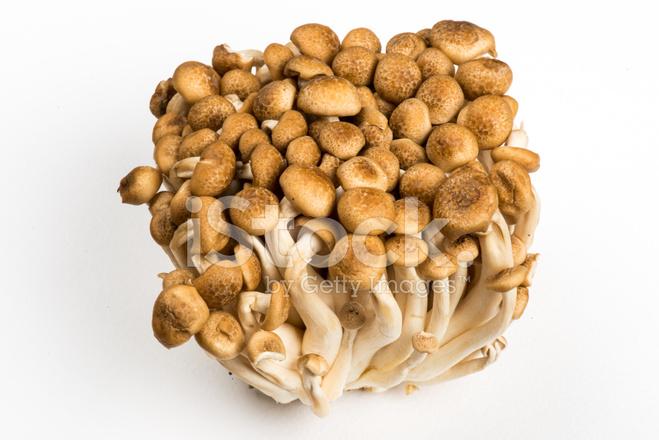 shimeji mushroom how to grow