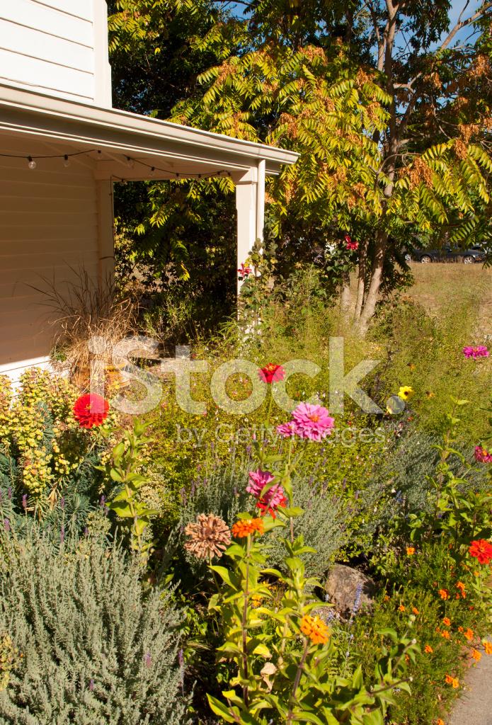 Late Summer Flowers Along Sidewalk IN Sonoma City ...