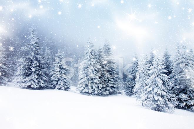 Weihnachten Hintergrund.Weihnachten Hintergrund Mit Verschneiten Tannen Stockfotos