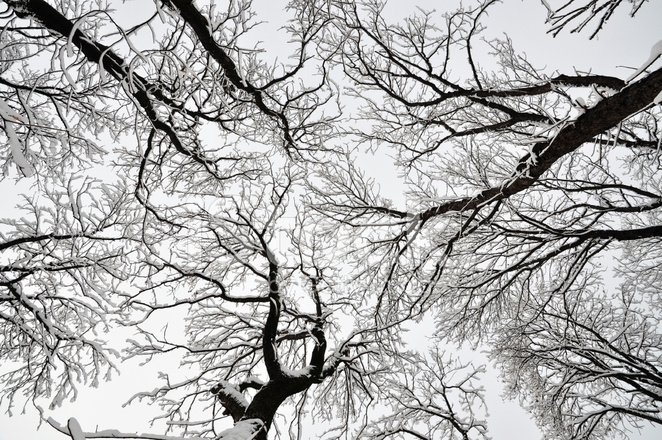 Premium Stock Photo of Tree Canopy AT Winter Covered BY Snow & Tree Canopy AT Winter Covered BY Snow Stock Photos - FreeImages.com