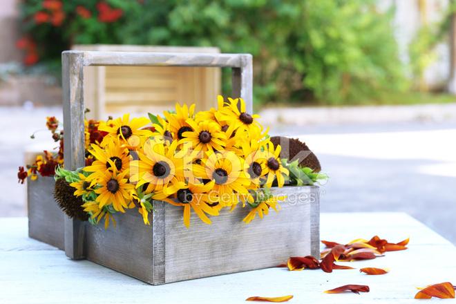 rudbeckia blumen in holz korb auf tisch im freien stockfotos. Black Bedroom Furniture Sets. Home Design Ideas
