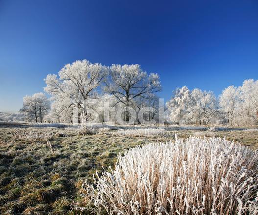 서리가 내린 풍경 스톡 사진 - FreeImages.com