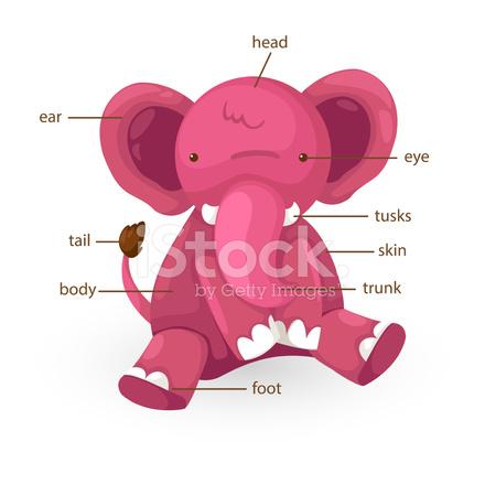 Parte Del Vocabulario DE Elefante Del Vector DE Cuerpo Stock Vector ...