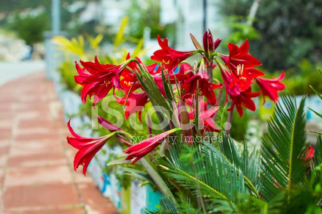 Harmonie der rote blumen und pflanzen stockfotos freeimages harmonie der rote blumen und pflanzen thecheapjerseys Images