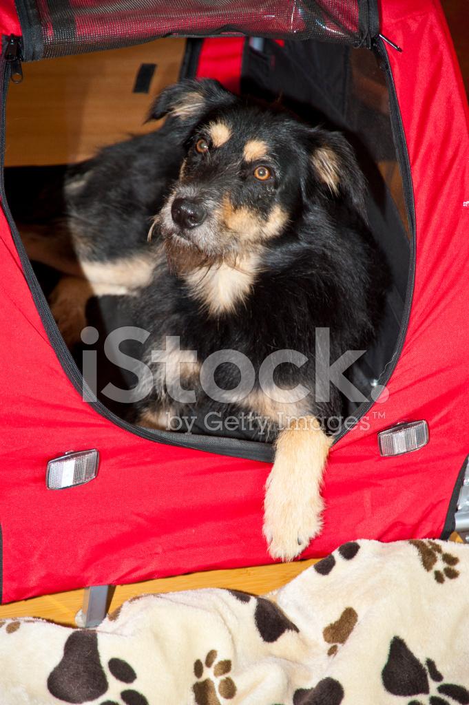 The Holiday Movie Dog Breed